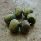 Tiny Olive Bead Wobbles